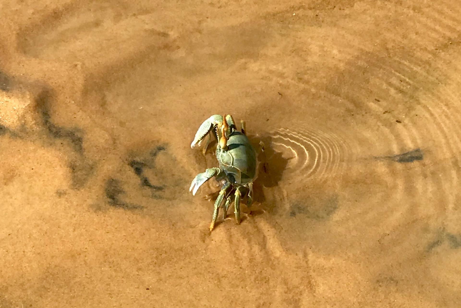 Moz Crab